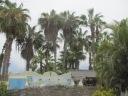 Palms over Cabaña